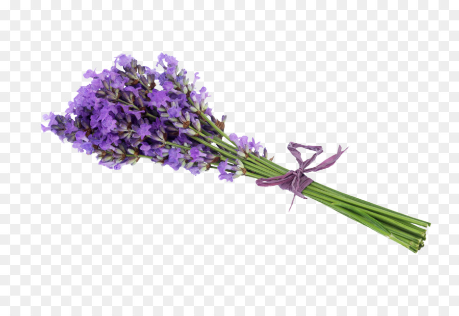 Lavender Flower Stock photography Getty Images - Lavender Bouquet ...