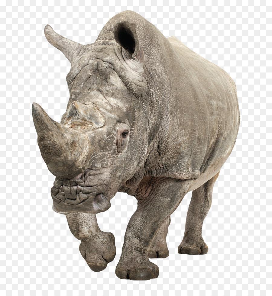 Rhinoceros Snout png download - 1400*1494 - Free Transparent