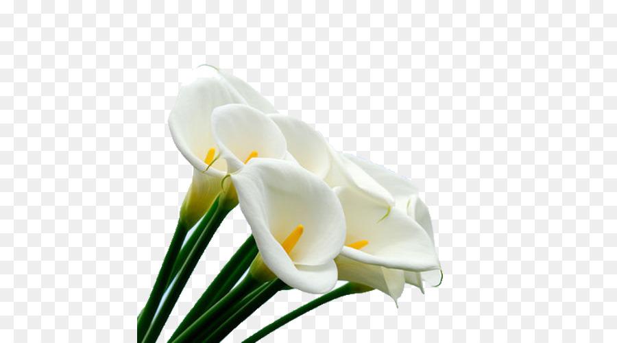 arum lilies flower arum lily cake serradura white calla flower