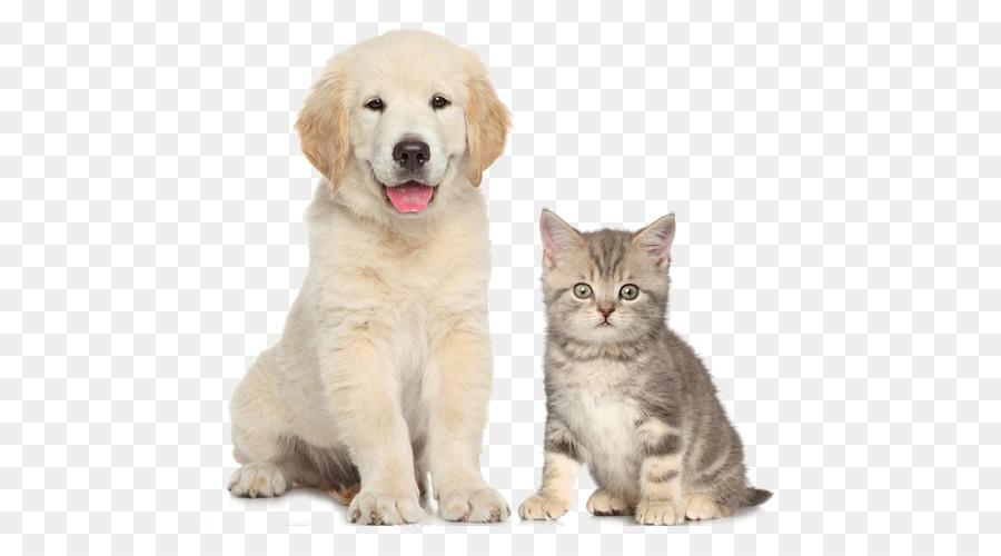 Dogu2013cat Relationship Dogu2013cat Relationship Pet Sitting Cute