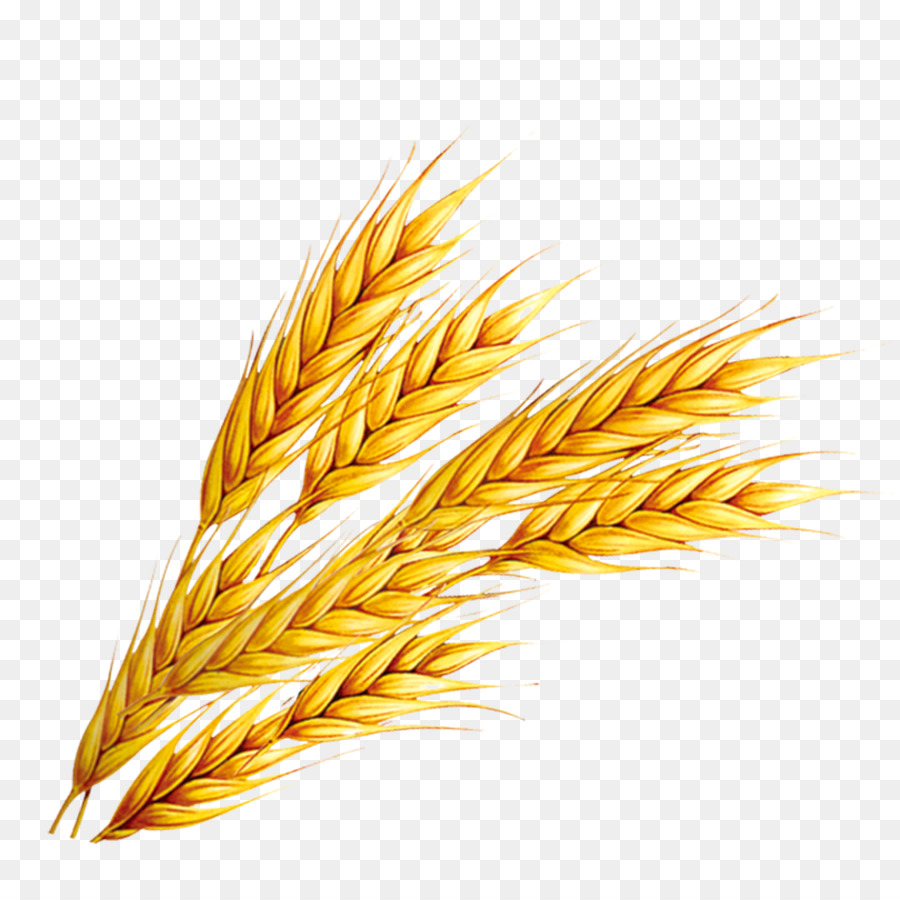 Cereals And Its Products Packaging additionally Vitamins 13355781 also Vitamin B  plex To Recover Alcoholism moreover 1137044359 as well Wheat Germ Vs Wheat Bran. on what is wheat germ