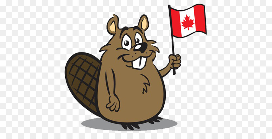 canada north american beaver clip art flag beavers png download rh kisspng com beaver clip art black and white beaver clip art pictures free
