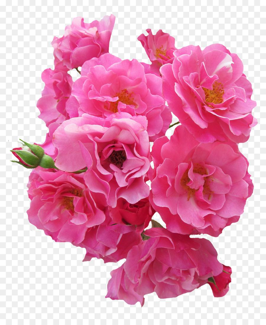 Flower rose pink bunch pink rose flower png download 11501382 flower rose pink bunch pink rose flower mightylinksfo