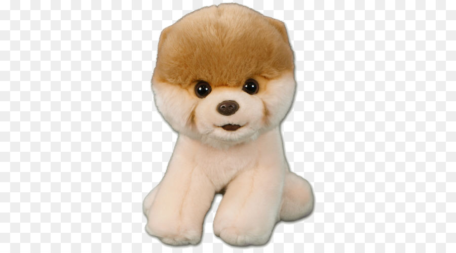 Pomeranian Boo Stofftier Boo Hund Png Pic Png Herunterladen 500
