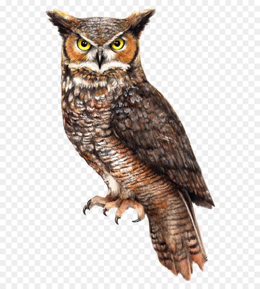 thought b barns fur of owl lakes community archive for and i are in owls barn blog compressed indigestible e parts middletonlakes gizzard before which feathers bones pellets food middleton regurgitated placestovisit the composed being