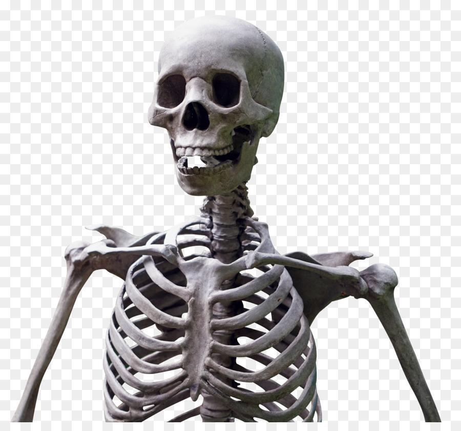 Esqueleto humano - Esqueleto Formatos De Archivo De Imagen - 1820 ...