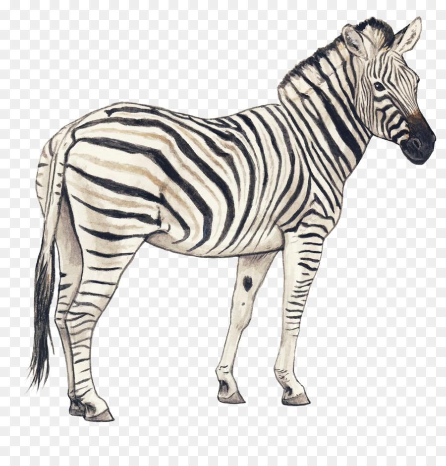 Quagga zebra pencil drawing horse zebra png clipart png download 900930 free transparent horse png download