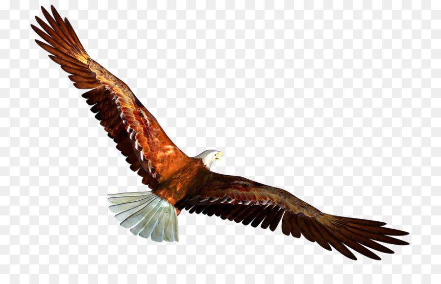 Bald Eagle Clip art - Eagles soar png download - 800*566 - Free ...