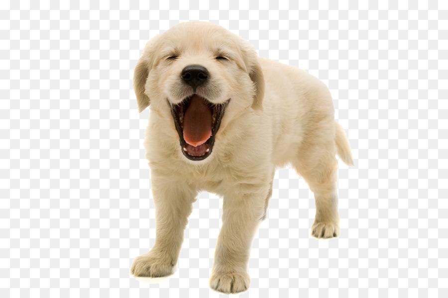 Iron Man Dog Veterinarian Pet Golden Retriever Puppy Png
