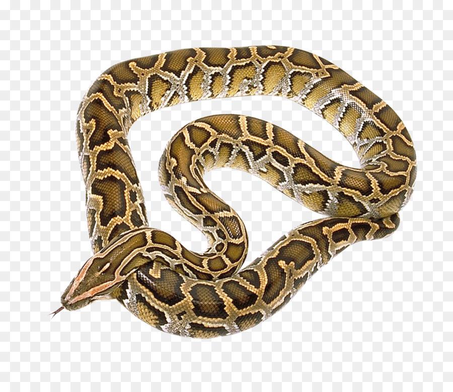 Serpiente Pitón - La serpiente png dibujo - Transparente png dibujo ...