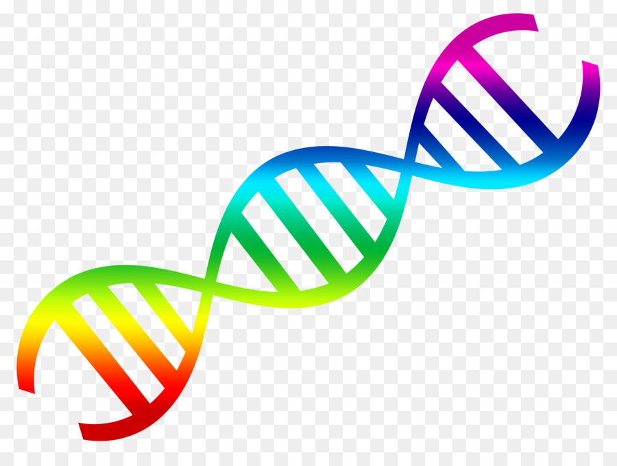 dna nucleic acid double helix clip art dna vector png download rh kisspng com clipart dna dna clipart png