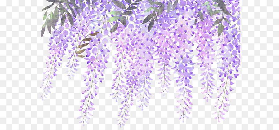 lavender flower purple wisteria painted lavender