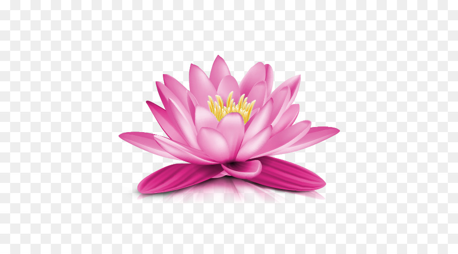 water lily clip art water lily png transparent picture