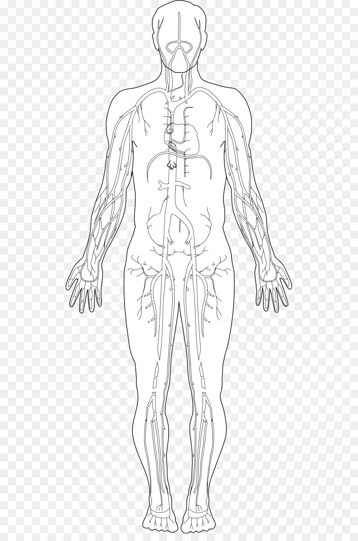 Cuerpo humano, el Homo sapiens sapiens Diagrama de Mano, Clip art ...