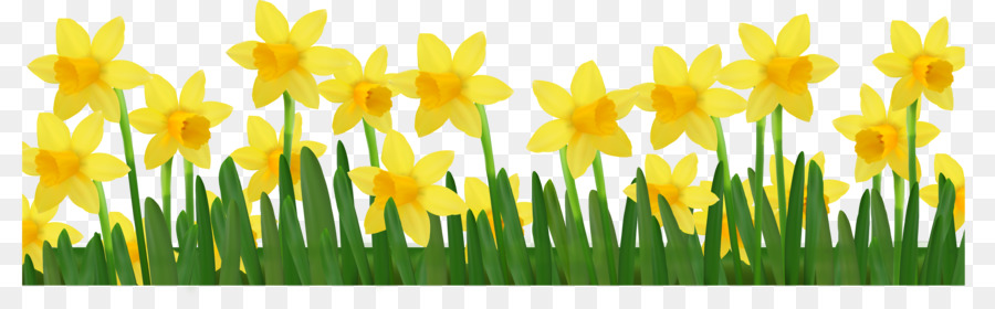 daffodil clip art daffodils pictures png download 4200 1283 rh kisspng com daffodil clip art free daffodil clip art free download