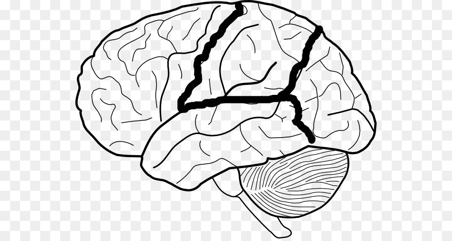 Lobes of the brain diagram human brain clip art blank eye diagram lobes of the brain diagram human brain clip art blank eye diagram ccuart