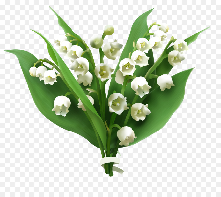 Lily of the valley Flower Jasmine - Lily of The Valley PNG Picture ...