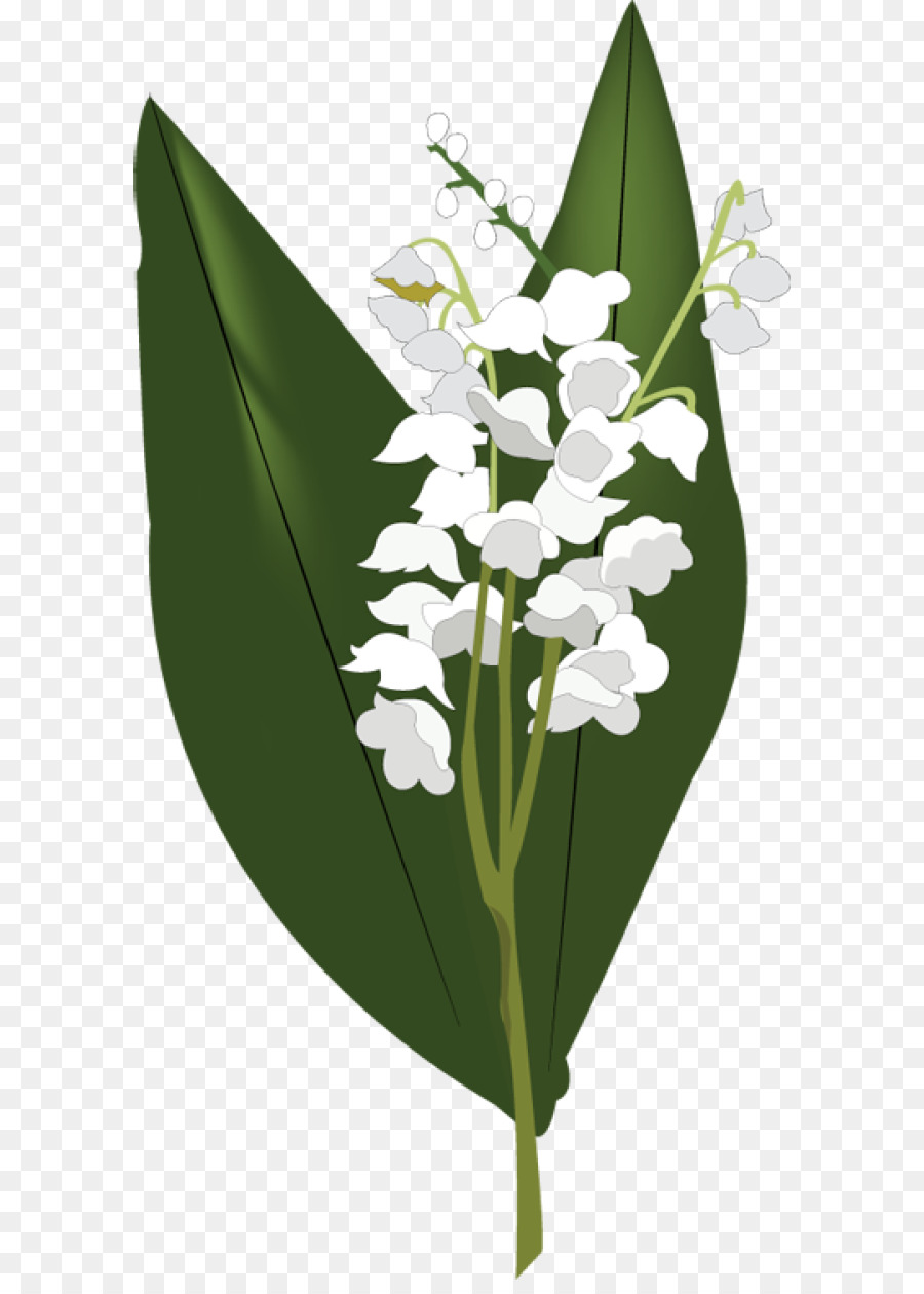 Lily Of The Valley Clip Art Lily Of The Valley Png Hd Png Download