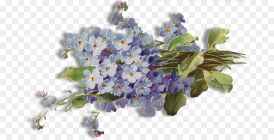 Flower forget me not png free download png download 1536782 flower forget me not png free download mightylinksfo
