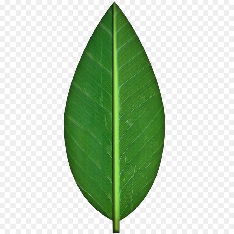 Autumn Leaf Color Clip Art Leaf Graphic 1024 1024