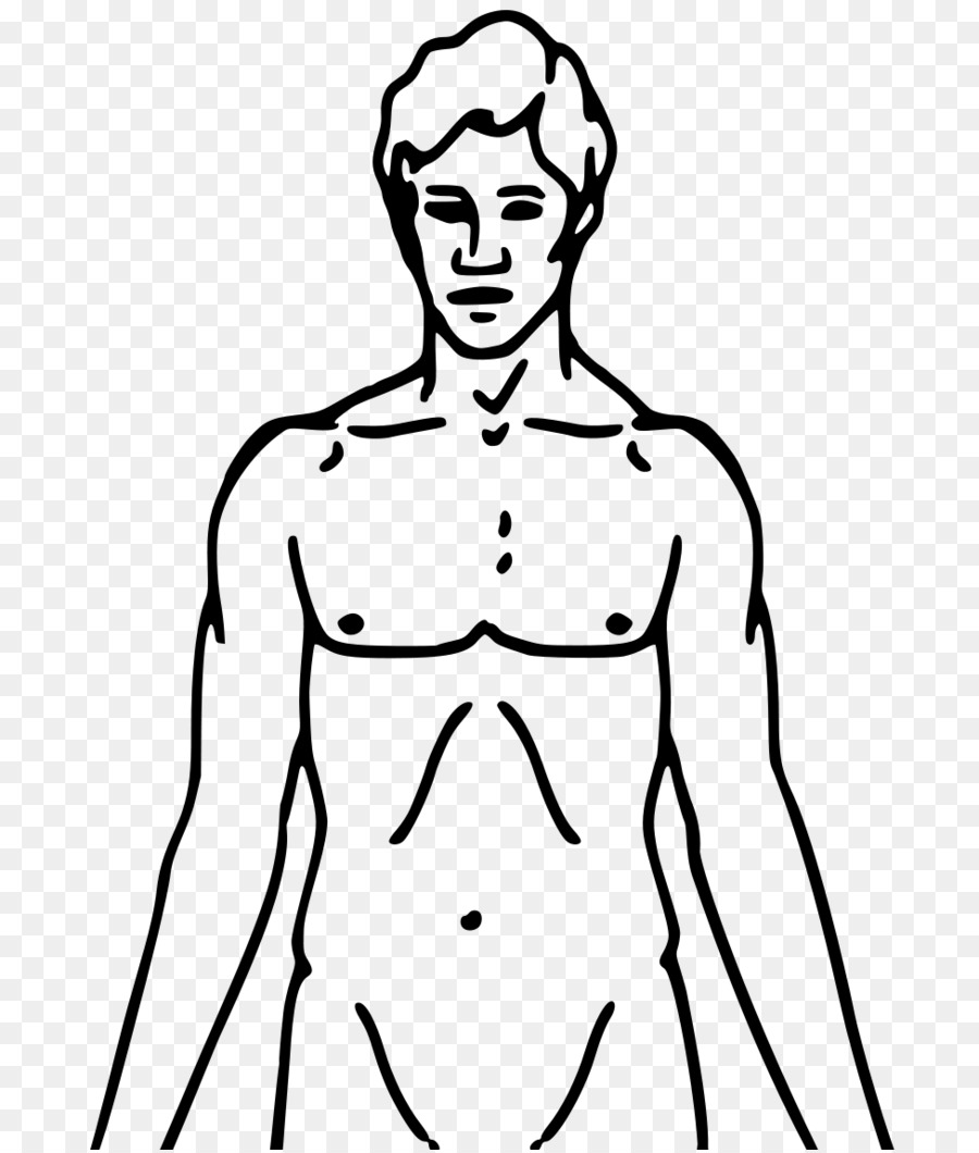 Cuerpo humano Músculo Diagrama de la Anatomía Clip art - Cuerpo png ...