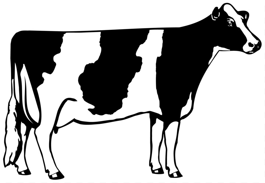 holstein friesian cattle beef cattle dairy cattle clip art cow rh kisspng com Dairy Cow Outline Cute Dairy Cow Clip Art