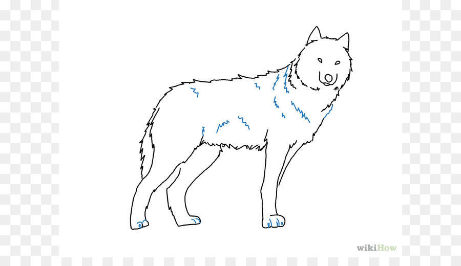 gray wolf drawing pencil sketch easy wolf drawings png download