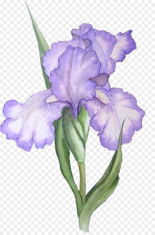 Iris versicolor iris flower data set iris lacustris clip art iris iris versicolor iris flower data set iris lacustris clip art iris cliparts izmirmasajfo