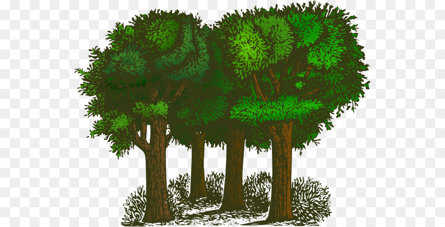Tree Forest Clip Art Transparent Tree Cliparts Png Download 600