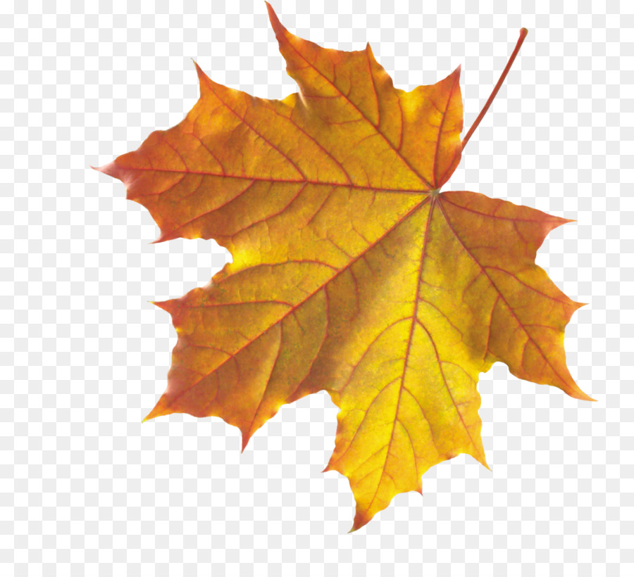 autumn leaves leaf clip art realistic autumn fall leaves Water Clip Art Intranet Clip Art