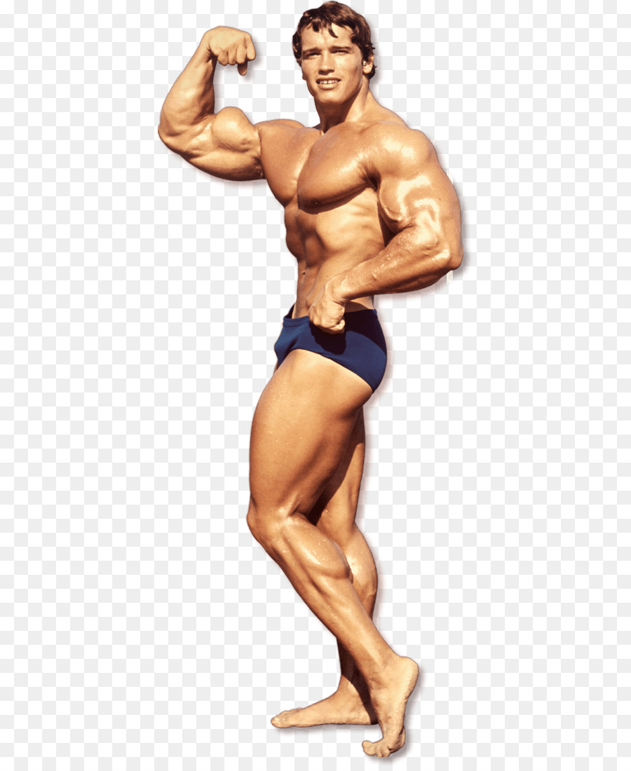 arnold the education of a bodybuilder pdf download