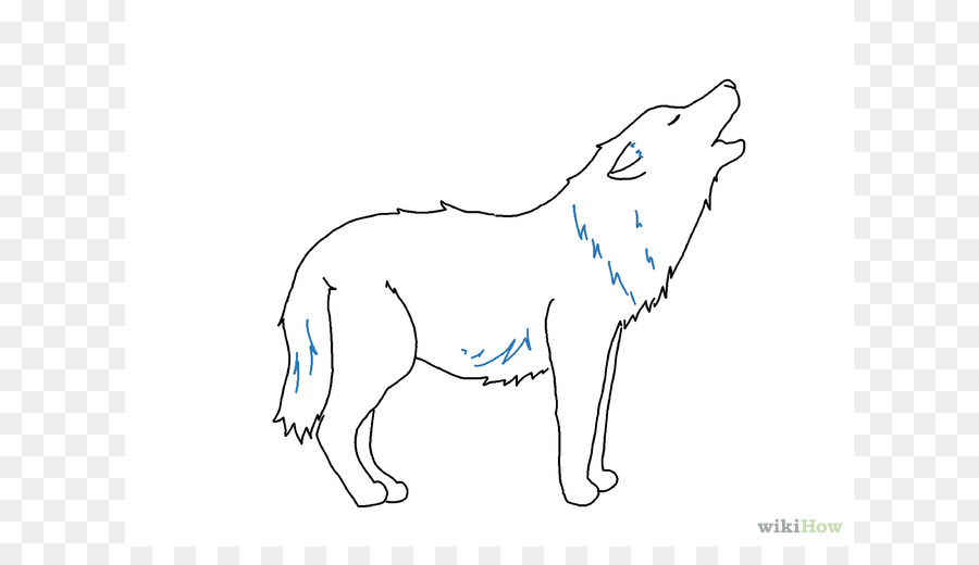 gray wolf drawing line art sketch easy wolf drawings png download