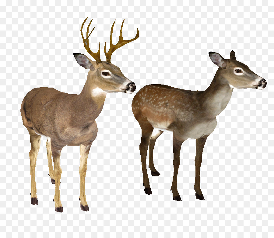 white tailed deer clip art whitetail deer head png png download rh kisspng com Deer Clip Art Black and White whitetail deer clipart free