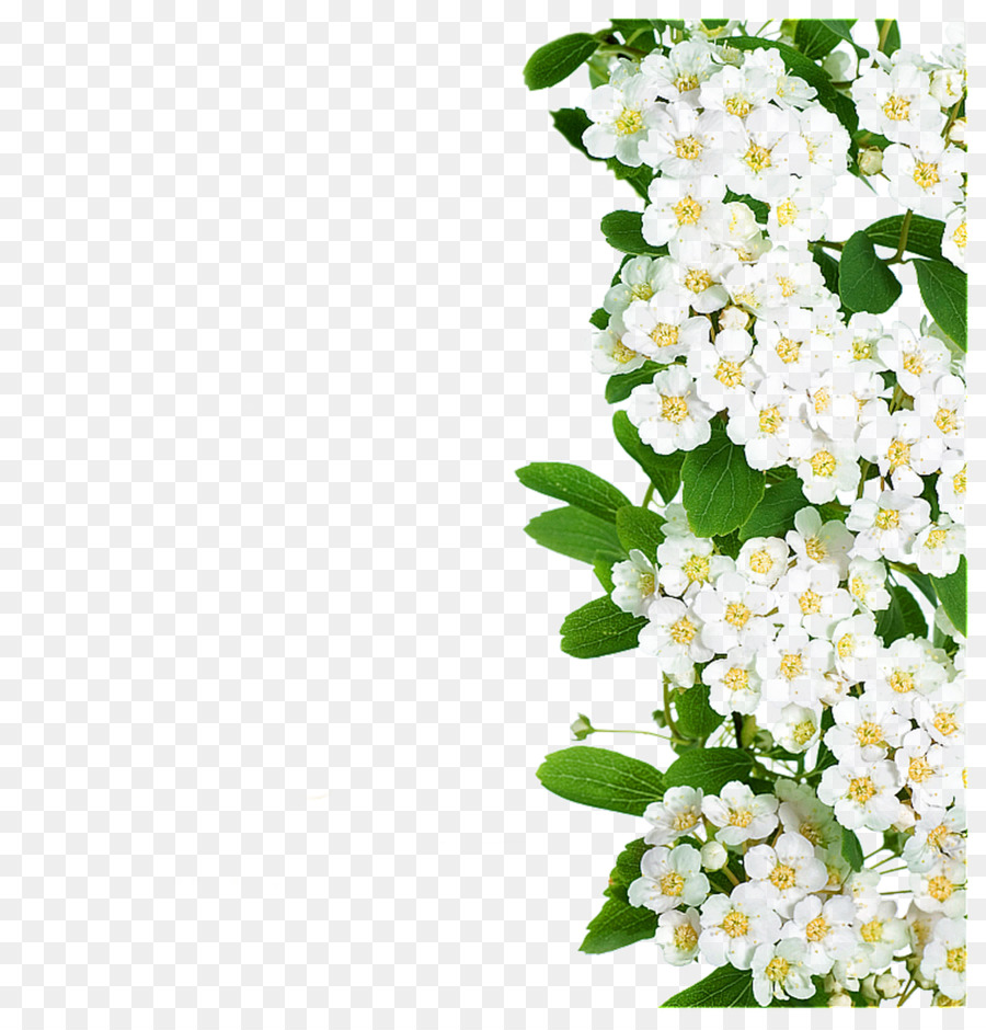 Flower white white flowers green leaves png download 24042502 flower white white flowers green leaves mightylinksfo