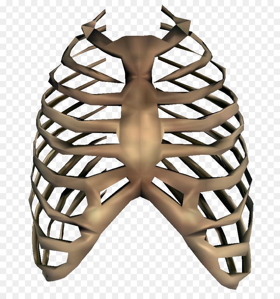 Rib cage Human skeleton Clip art - Bones PNG Transparent Image png ...
