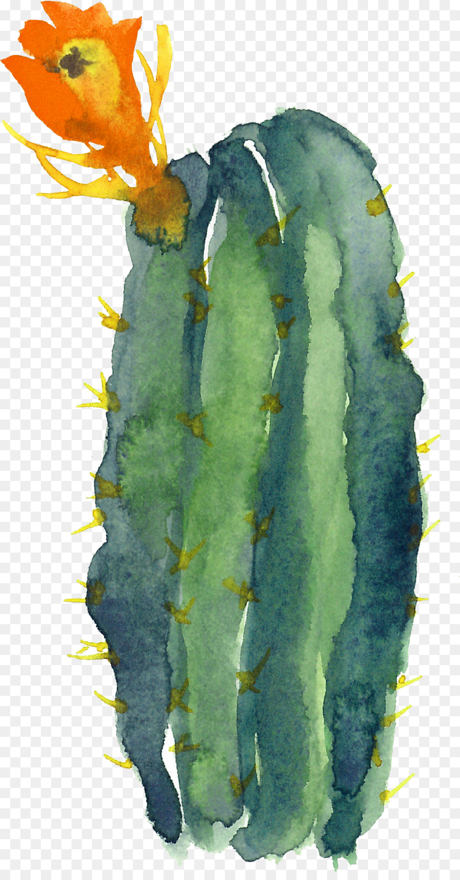 Cactaceae Modern Watercolor A Playful And Contemporary
