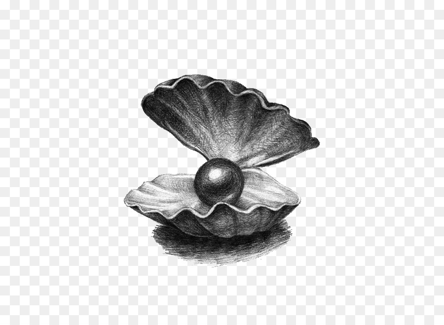 Pearl Drawing Illustration - Pearl shell png download ...