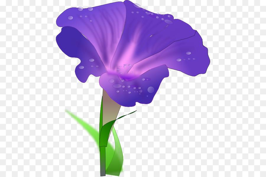 morning glory drawing clip art iris cliparts png download 522 rh kisspng com irish clip art free images irish clip art borders