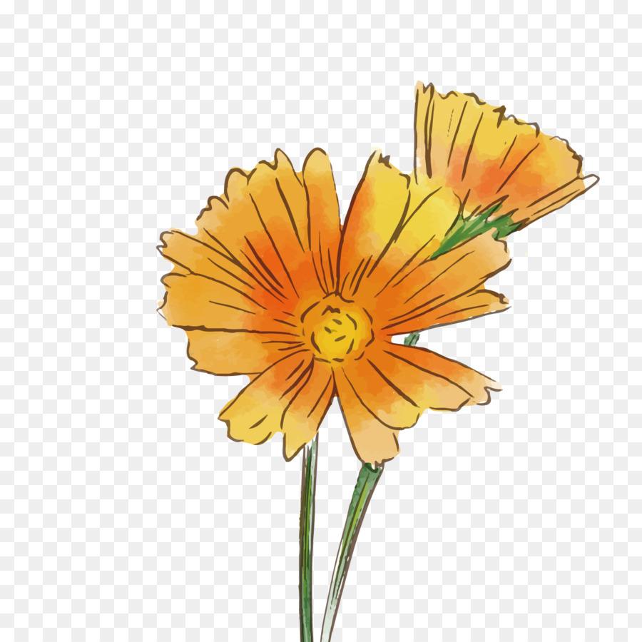 Transvaal Daisy Common Daisy Flower Chrysanthemum Vector Gerbera