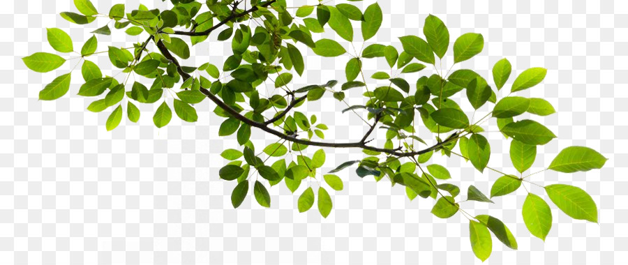 Tree Branch Clip Art Tree Branch Transparent Png Png Download