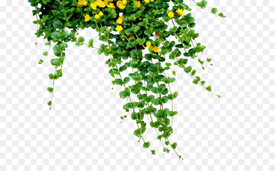 Bangladesh Bengali New Year (Pxf4hela Boishakh) - Plants PNG Free ...