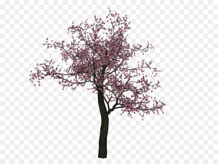 cherry blossom cherry blossom tree - cherry tree png image png download - 1412 1059