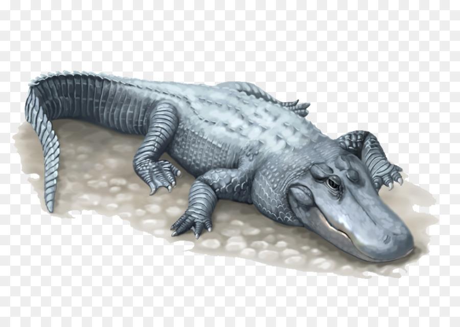 Cocodrilo del nilo cocodrilo Americano cocodrilo Chino - De Dibujos ...