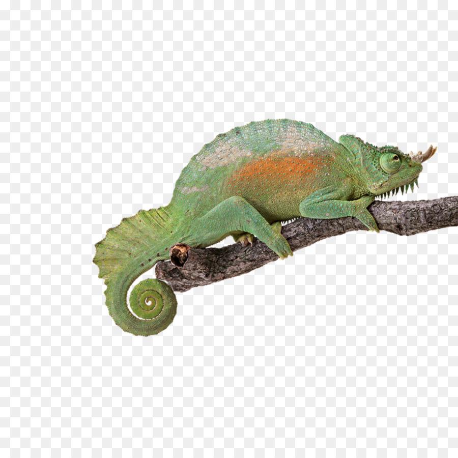 Reptile Chameleons Turtle Lizard Light - Green chameleon png ...