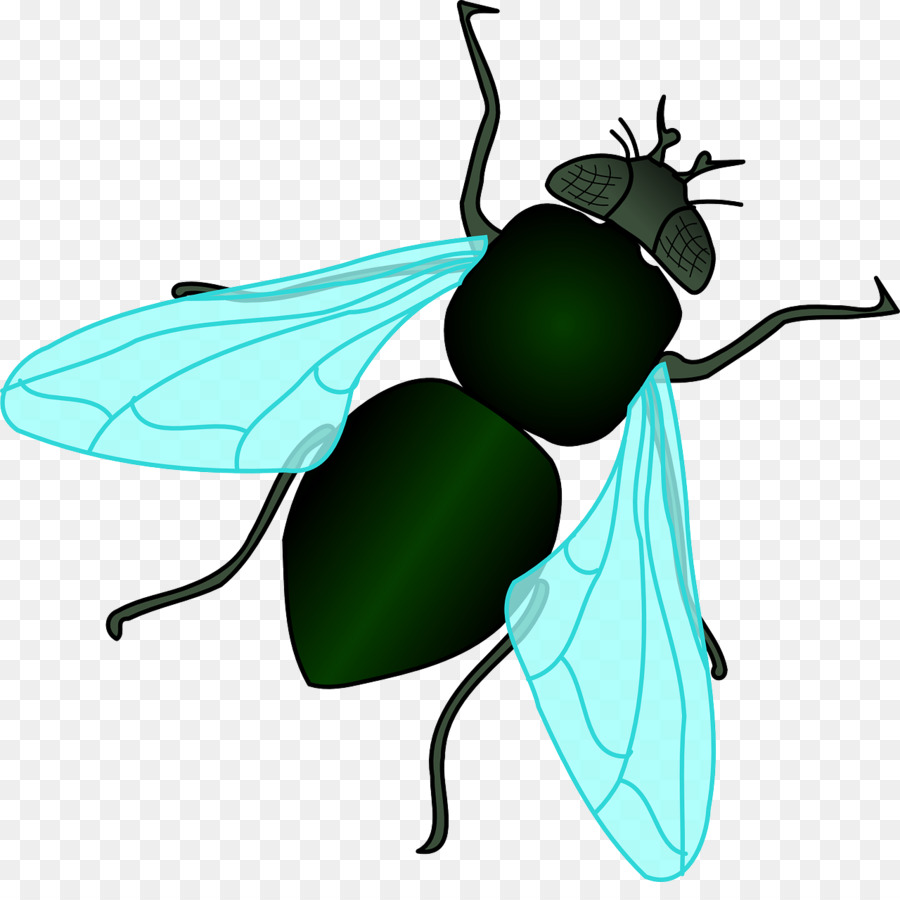 housefly insect clip art green flies png download 1280 1254 rh kisspng com clipart flight clip art flying birds