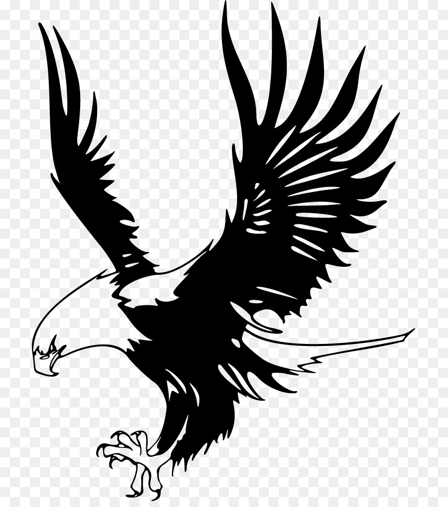 Bald eagle eagle just eagles png