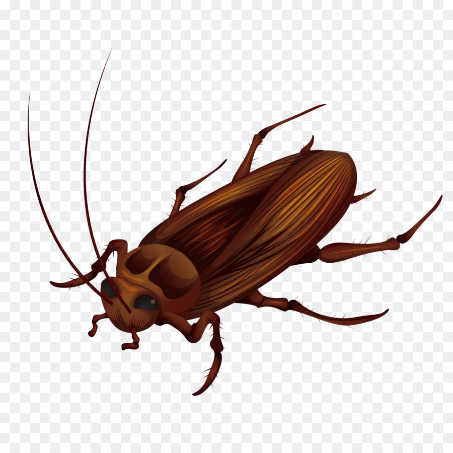 Cockroach Anatomy Stock photography Illustration - Vector big ...