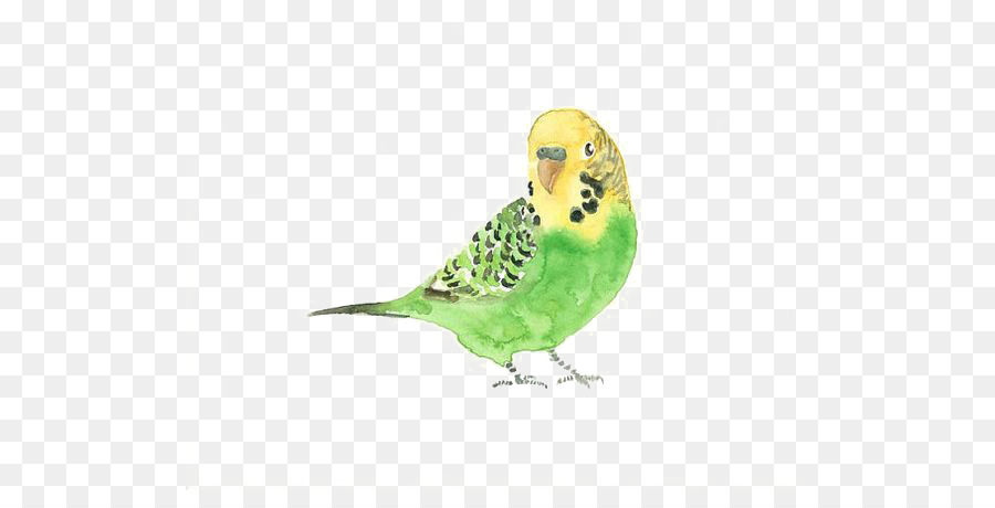 76 Gambar Lukisan Hewan Burung Terbaik