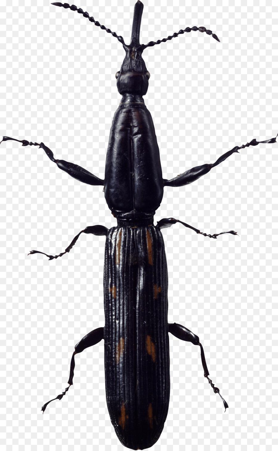 Insekt Schabe Ein Insekt Png Herunterladen 1539 2493