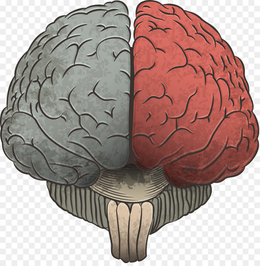 Agy Cerebrum Information Drawing Vector Hand Drawn Brain Png